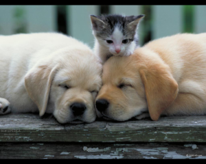 Puppies_And_kittens_Picture253-1-