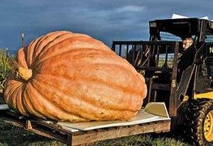 giant-pumpkin