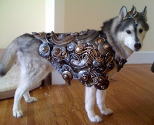 husky in armor