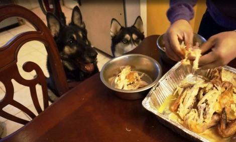 huskies with turkey