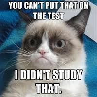 grumpy cat finals