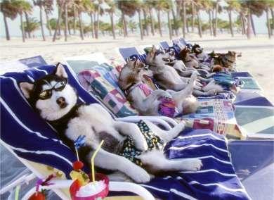 huskies beach chairs