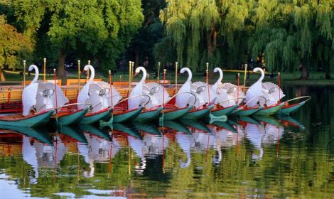 boston common swan boats